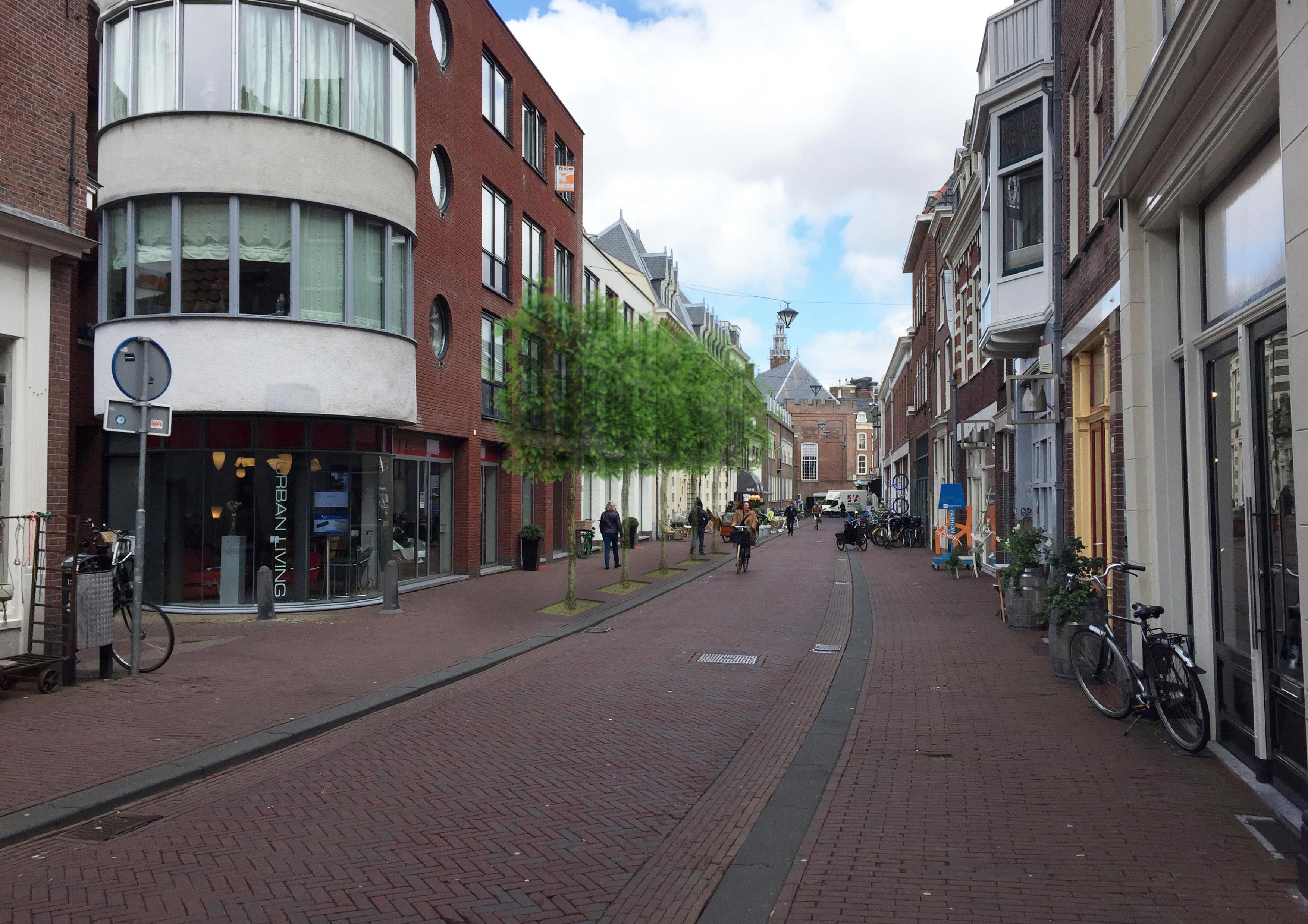 5 bomen Koningstraat_pdf
